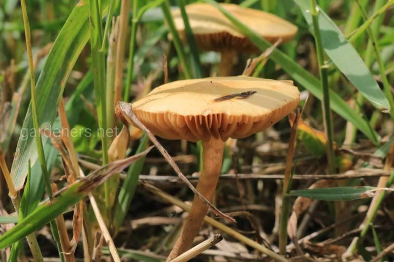 Микориза или микоризные грибы: что это, применение в огородничестве и садоводстве