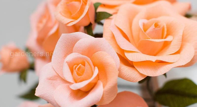 paper-rose.jpg