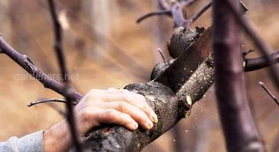 Правила спила деревьев