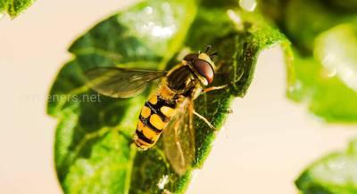 Что делать, если тебя укусило насекомое. Аллергические реакции