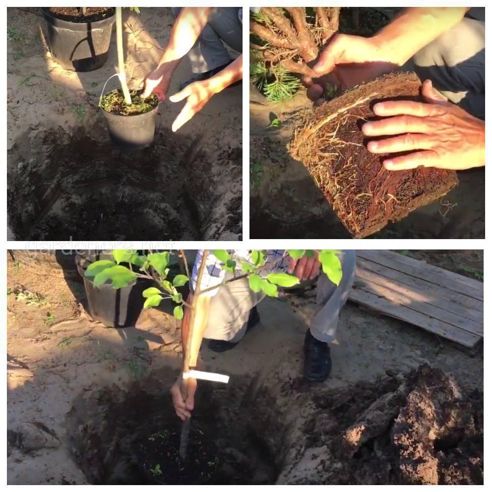 Особенности посадки растений с закрытой корневой системой