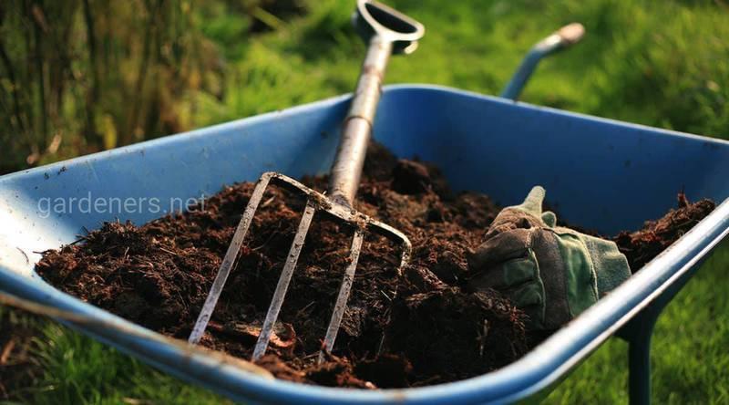 Почему важна внекорневая подкормка сада после сбора урожая до опадения листьев?