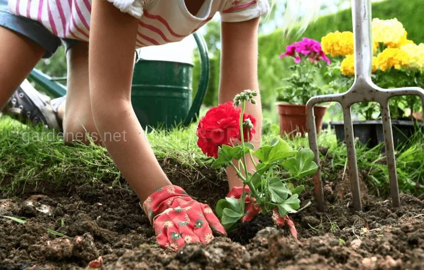 Разбиваем и пересаживаем цветник в мае