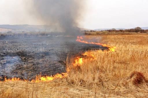 Підсічно-вогневе землеробство
