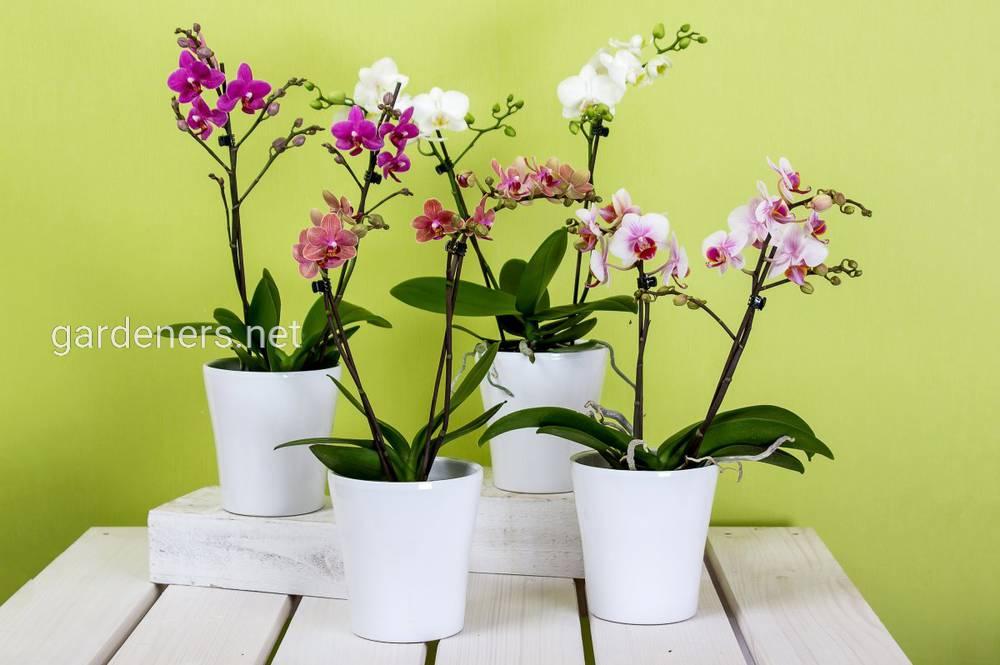 Когда нужно подкармливать орхидеи.