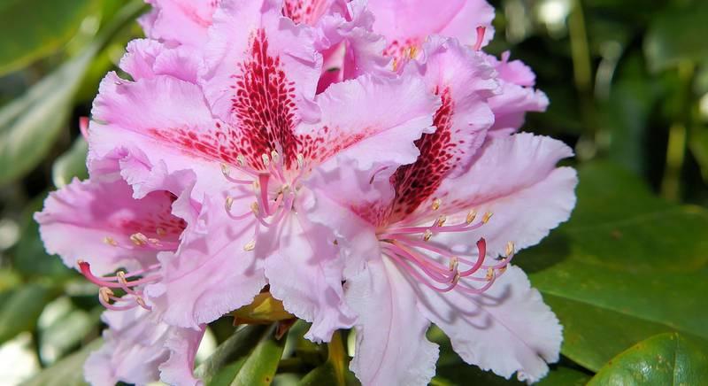 flowers-744528.jpg