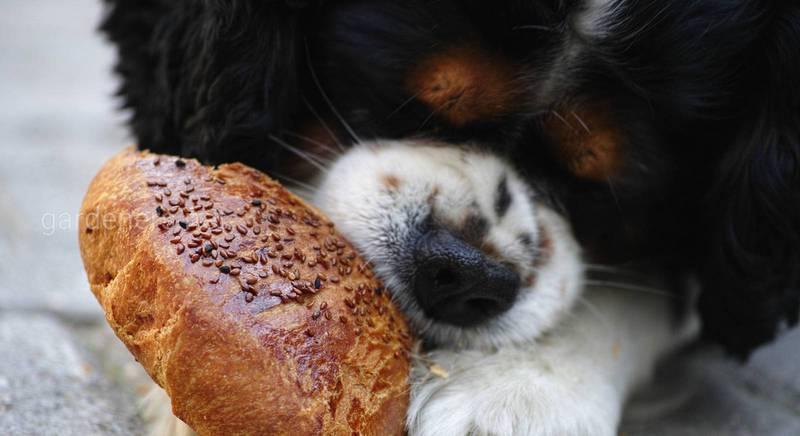 Десятка самых опасных продуктов для рациона собак