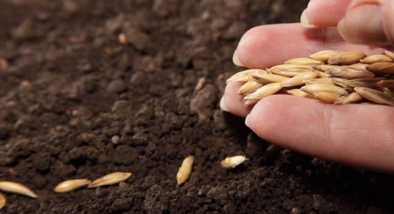 Подзимний посев осенью: посадка семян и растений под зиму