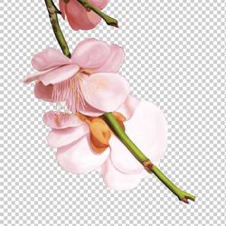 """Магазин цветов """"Вишня"""""""
