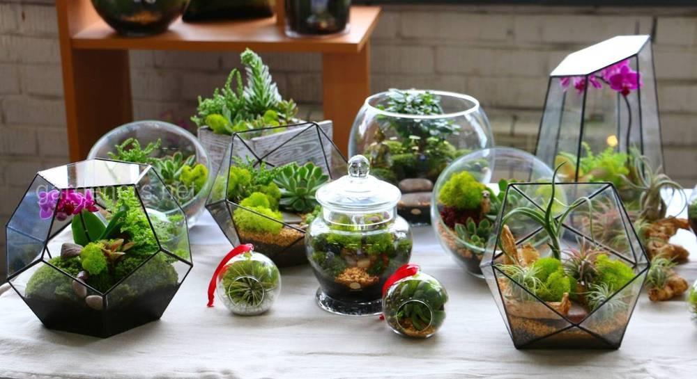 бутылочный мини-сад.jpg