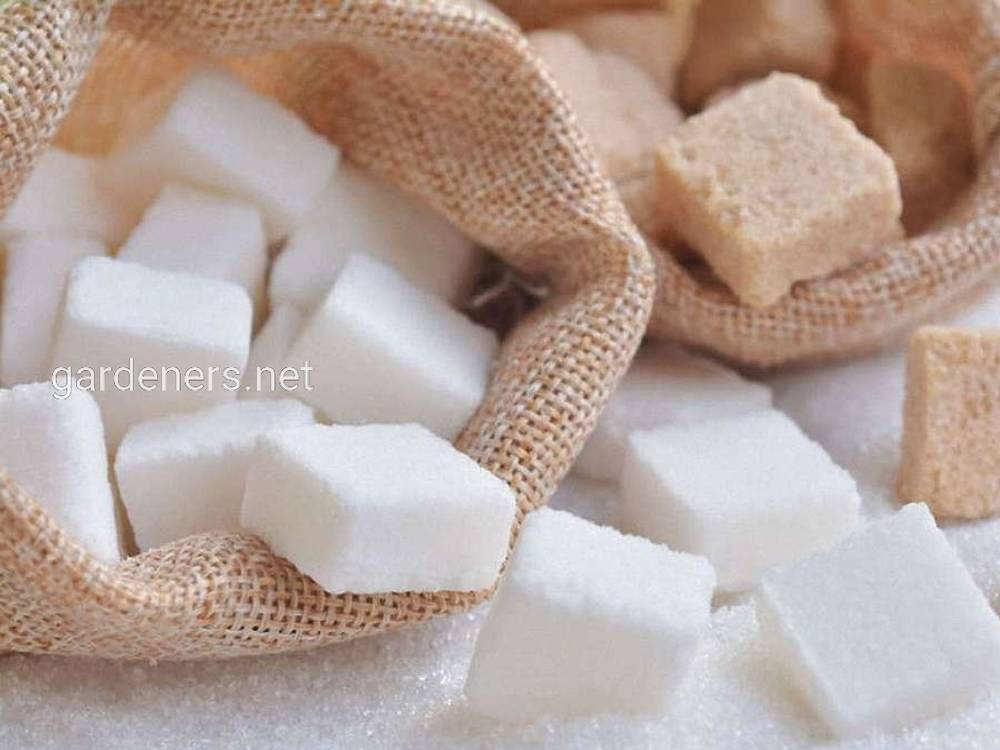 Факти про цукор