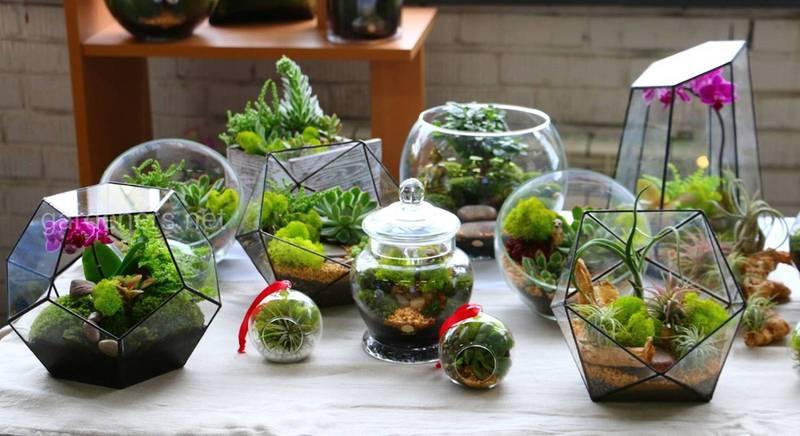 Бутылочный мини-сад – оригинальная разновидность флорариума