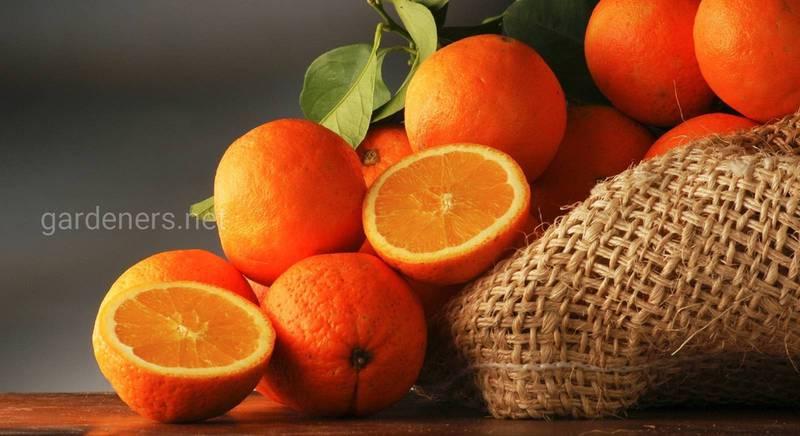 12 интересных фактов про апельсины