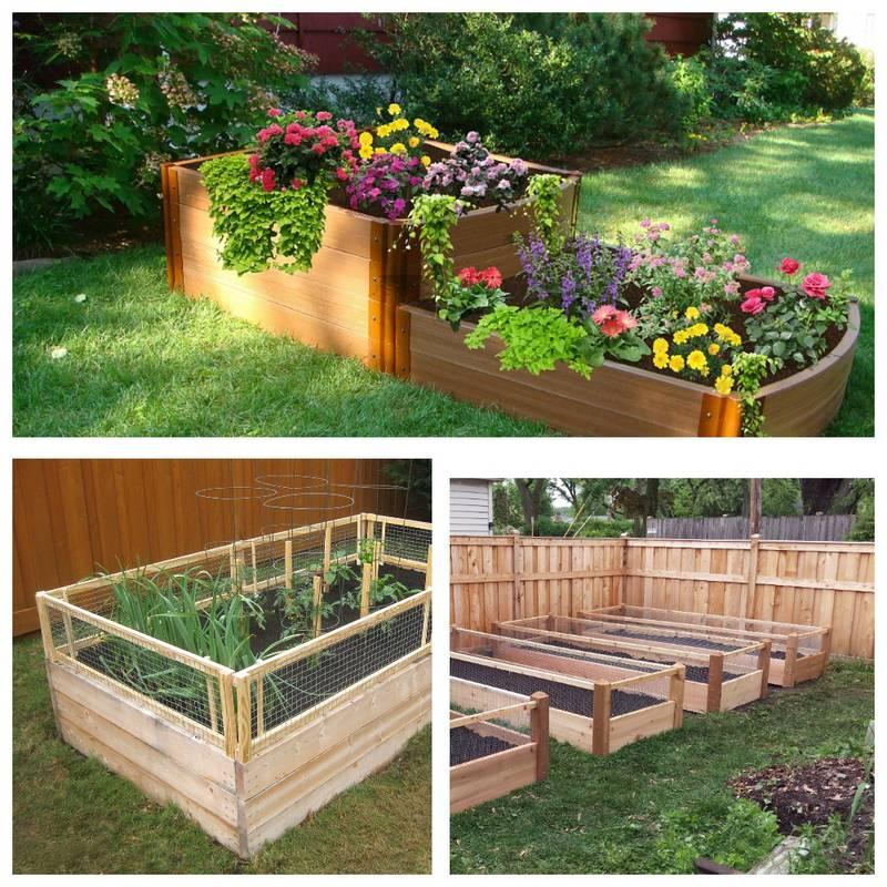 Поради для починаючих садоводів! Як виростити рослини в кашпо, горщиках та емностях?