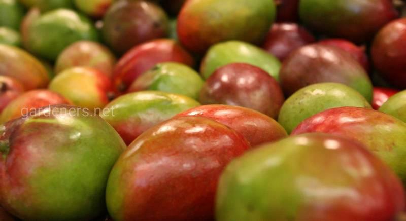 Правила дозревания экзотических фруктов
