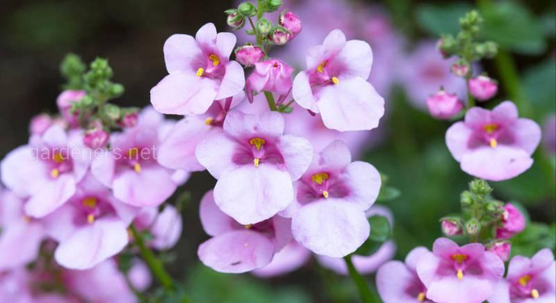 Подбираем красивые ампельные растения для подвесных корзин
