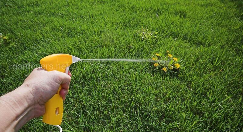 Как удалить мох с газона: поэтапная инструкция