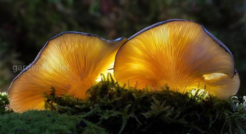 грибы.jpg
