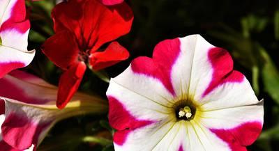 blossom-2717940_1920.jpg