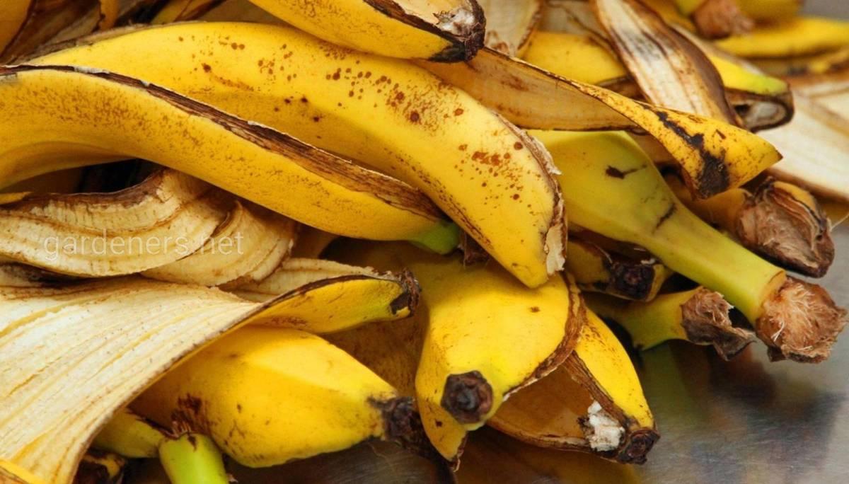 банановая кожура - удобрение