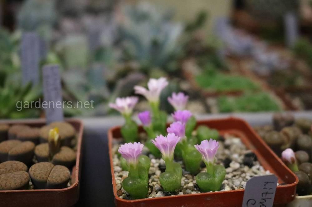 Догляд за рослинами та сукулентами