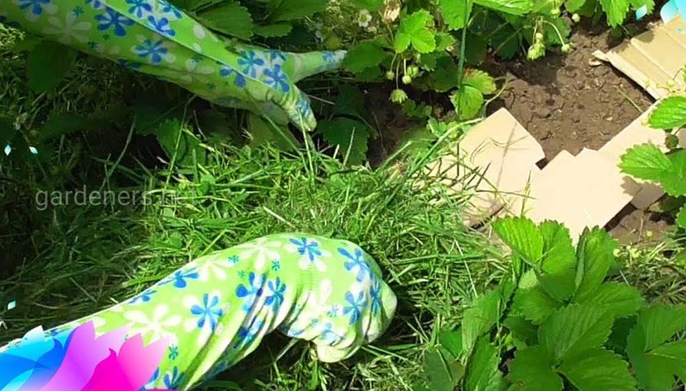 мульчирование скошеной травой