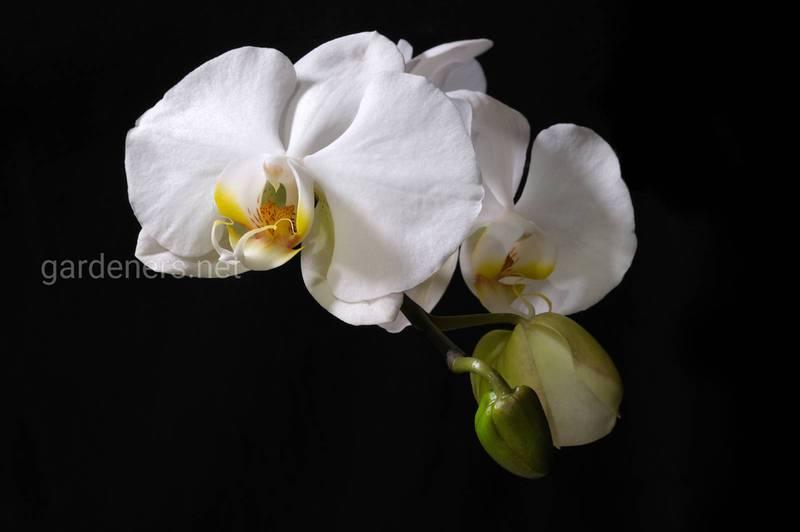 Живые коллекции орхидей. Обозначение наград и важность умения читать бирки