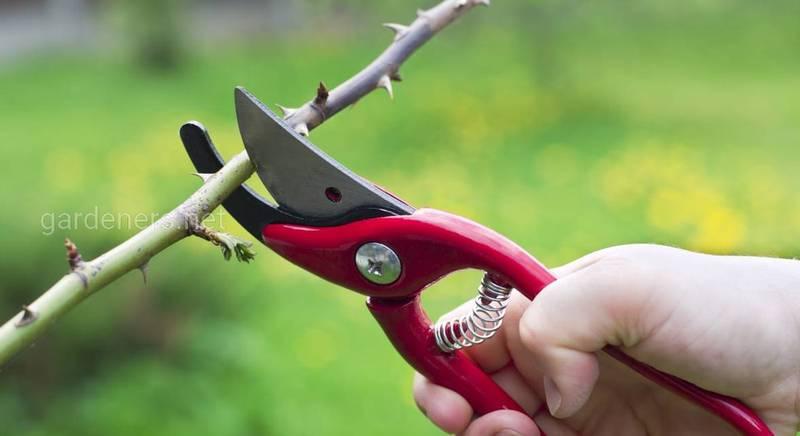 Омолоджуюча обрізка дерев і чагарників