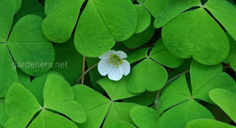 ТОП-10 кімнатних рослин, які принесуть удачу, благополуччя і везіння в ваш будинок