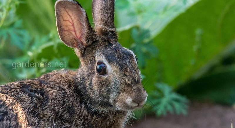Кормушки для кроликов: что надо о них знать и как изготовить своими руками