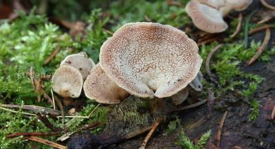 ТОП-15 самых поразительных фактов о мире грибов