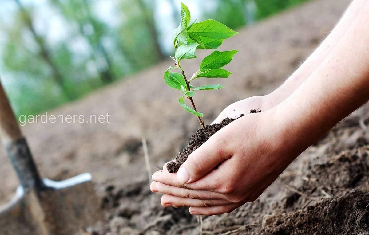 посадка новых растений