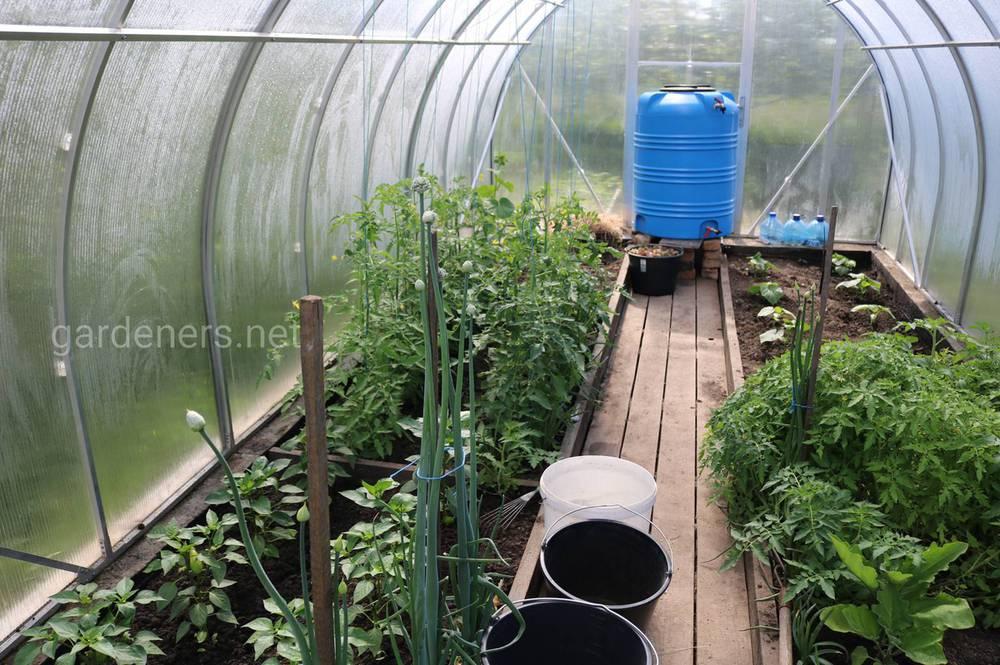 Чи можна садити томати та перці поруч