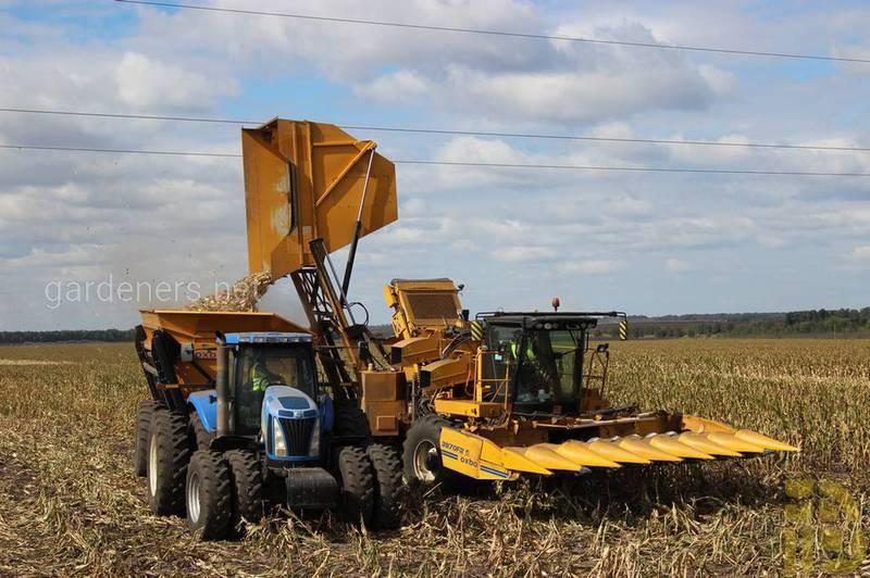Какие агротехнические мероприятия проводят после сбора урожая злаковых культур?