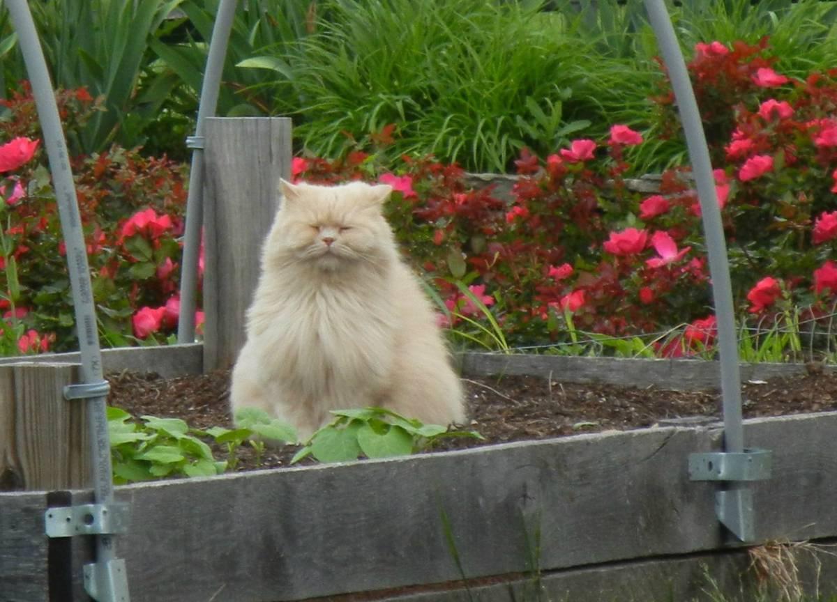 кот и сад
