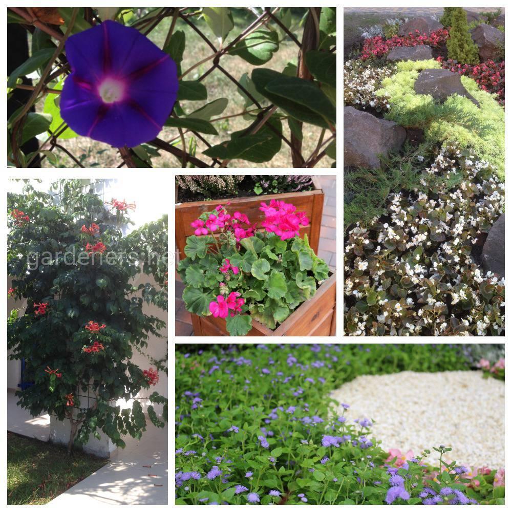 Приёмы, подходящие для маленького сада