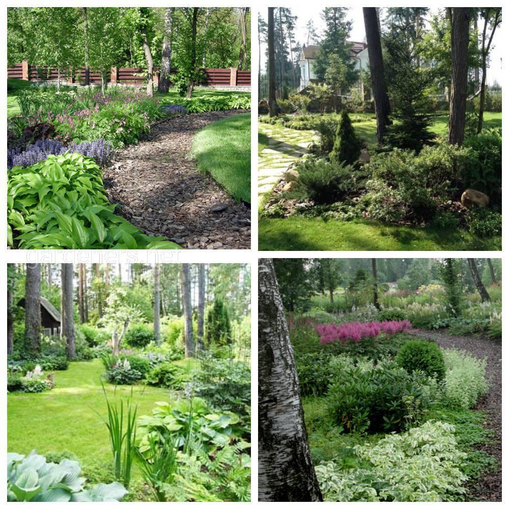 лесной стиль сада